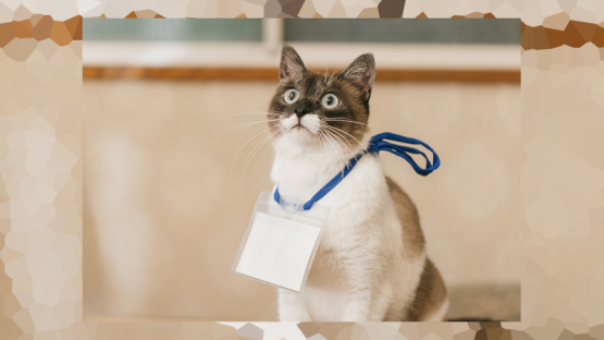 Inilah Daftar Nama Kucing Terpopuler Di Jepang Tahun Ini Berita Jepang Japanesestation Com