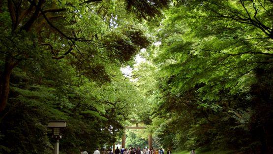 Kuil Meiji Jingu
