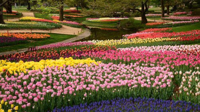 Showa Kinen Park, tempat tenang di Tokyo