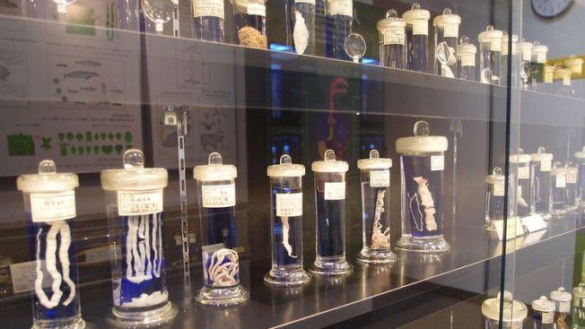 museum parasit di jepang