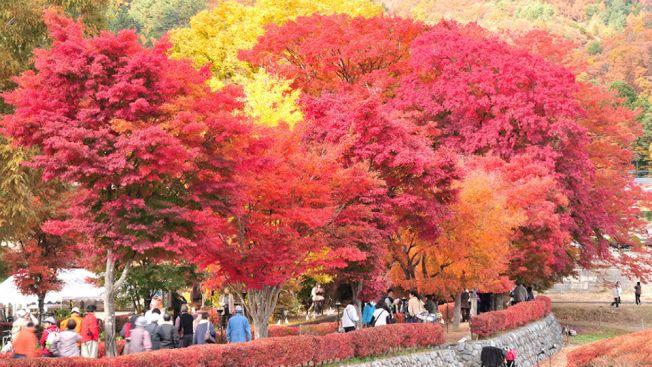 Melihat daun musim gugur