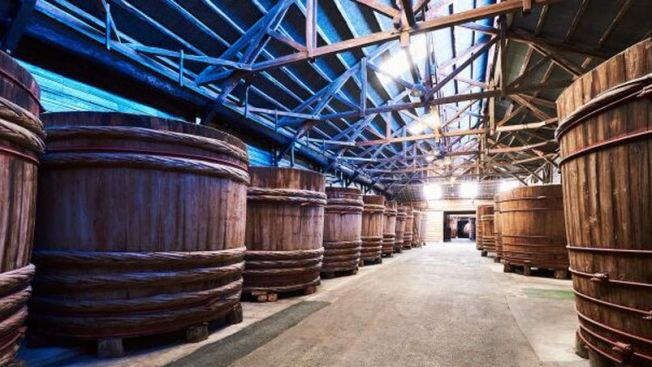 proses fermentasi shoyu belalang antcicada