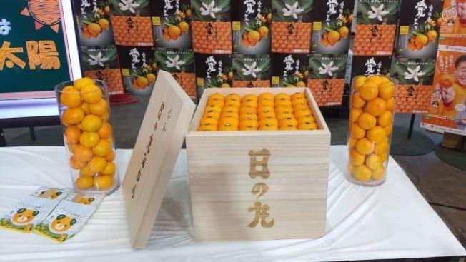 Jeruk Mandarin Satsuma