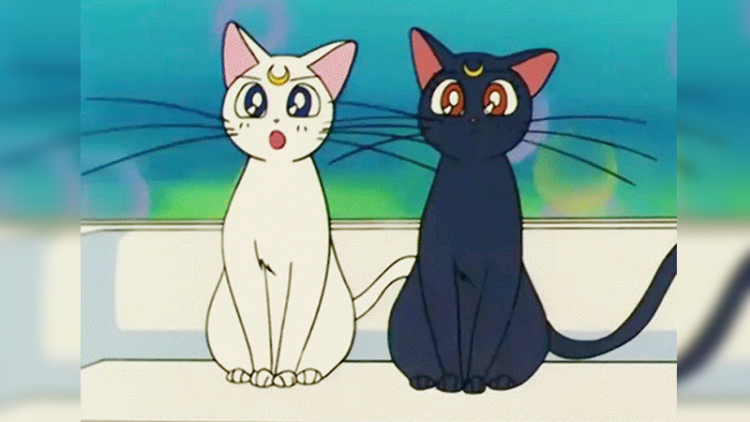 Inilah 7 Kucing Anime Yang Paling Lucu Dan Imut