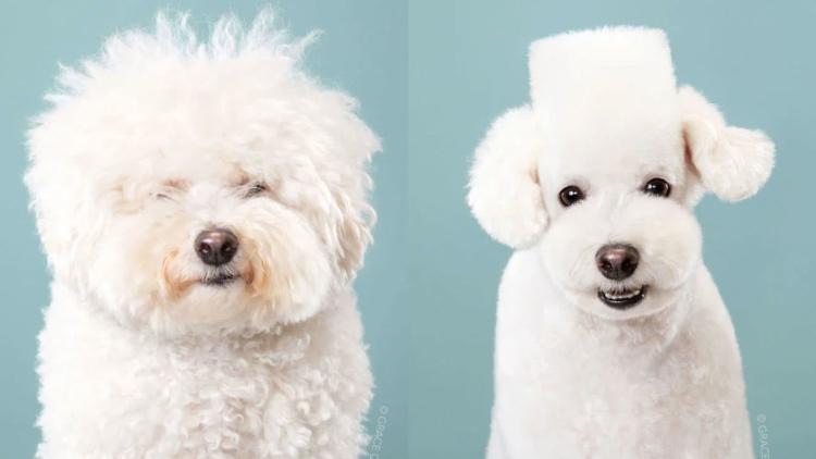 Gaya rambut anjing di Jepang yang menggemaskan ...
