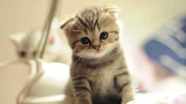 Nama Kucing Jepang Terpopuler Berita Jepang Japanesestation Com