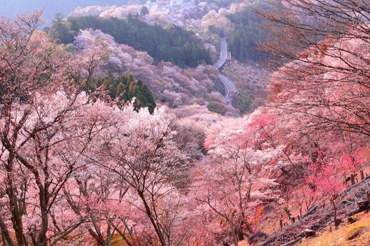 Yoshino, Nara (tsunagujapan.com)