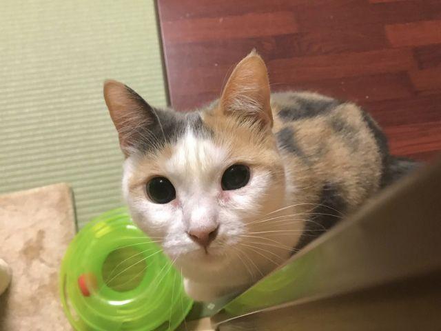 kucing ryokan Jepang japanesestation.com