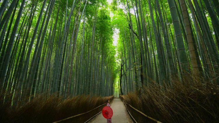 Hutan Bambu Arashiyama, Kyoto