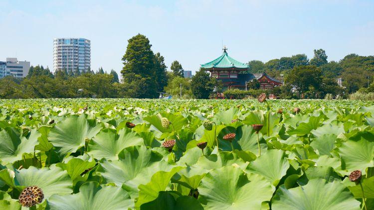 Tokyo taman terindah japanesestation.com