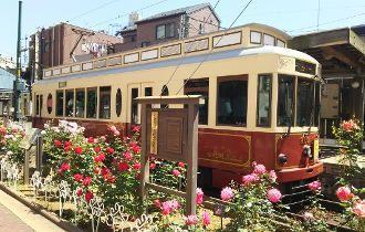 Trem Sakura