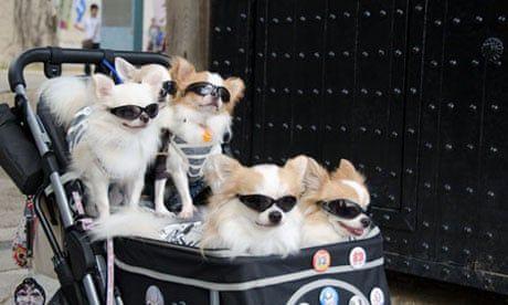 hewan peliharaan jepang japanestation.com
