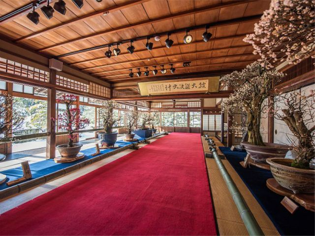 Nagahama Plum Tree Bonsai Exhibition