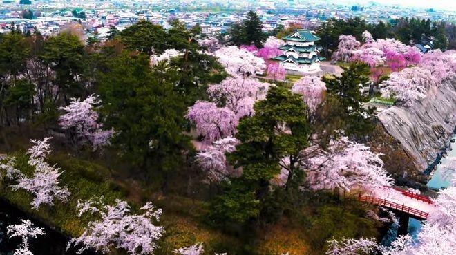 bunga sakura jepang hirosaki japanesestation.com