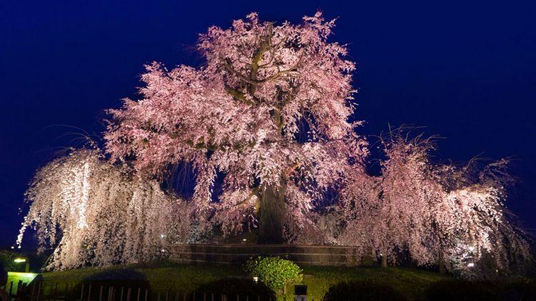 Taman Maruyama jepang