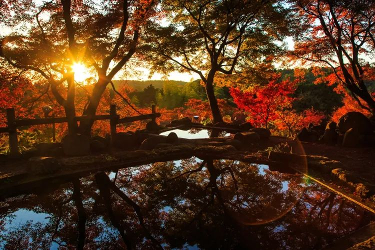 Taman Misojien