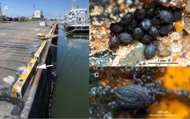 Spesies tungau baru di Jepang ini dinamakan twitter japanesestation.com