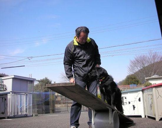 fukushima bencana nuklir anjing penyelamat japanesestation.com