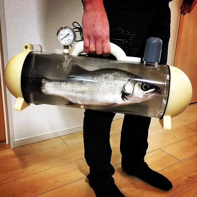 Bawa ikan hidup dengan tangki unik ini untuk membuat sushi segar di rumah japanesestation.com